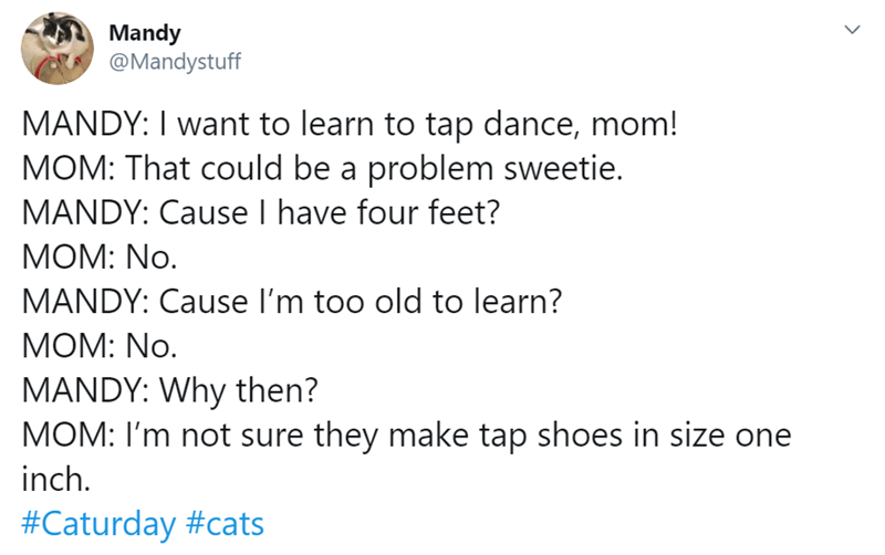 Text - Mandy @Mandystuff MANDY: I want to learn to tap dance, mom! MOM: That could be a problem sweetie. MANDY: Cause I have four feet? MOM: No. MANDY: Cause l'm too old to learn? MOM: No. MANDY: Why then? MOM: I'm not sure they make tap shoes in size one inch. #Caturday #cats