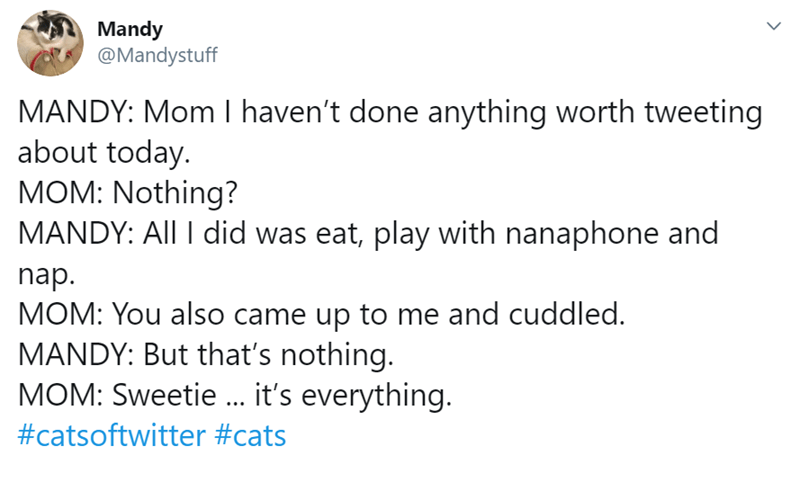 Text - Mandy @Mandystuff MANDY: Mom I haven't done anything worth tweeting about today. MOM: Nothing? MANDY: All I did was eat, play with nanaphone and nap. MOM: You also came up to me and cuddled. MANDY: But that's nothing. MOM: Sweetie .. it's everything. #catsoftwitter #cats