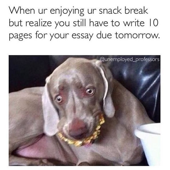 Weimaraner - When ur enjoying ur snack break but realize you still have to write 10 pages for your essay due tomorrow. @unemployed professors