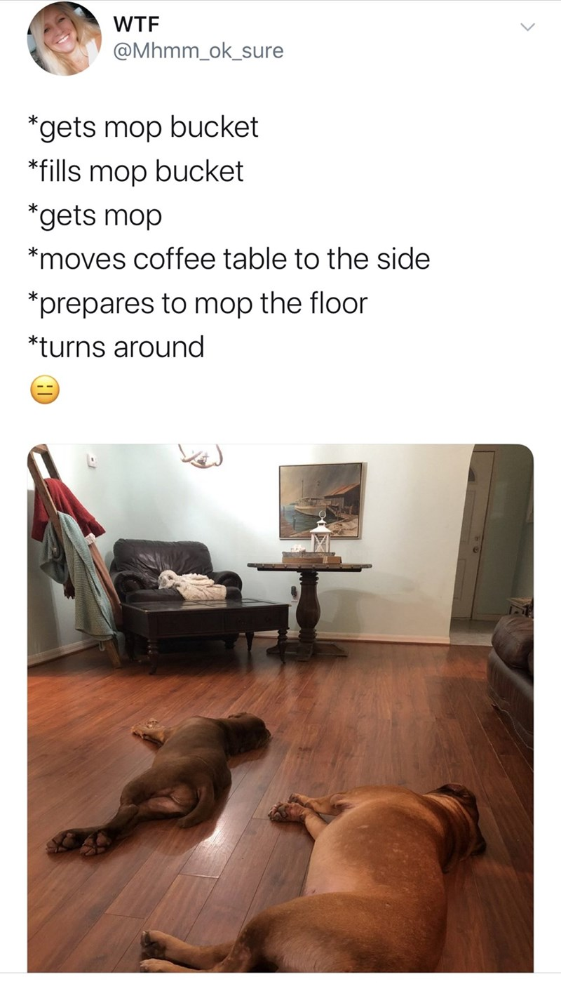 Floor - WTF @Mhmm_ok_sure *gets mop bucket *fills mop bucket *gets mop *moves coffee table to the side *prepares to mop the floor *turns around