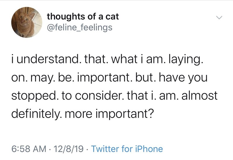 Text - thoughts of a cat @feline_feelings i understand. that. what i am. laying. on. may. be. important. but. have you stopped. to consider. that i. am. almost definitely. more important? 6:58 AM · 12/8/19 · Twitter for iPhone