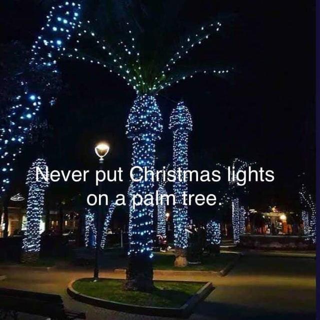 Christmas decoration - Never put Christmas lights on a palm tree.