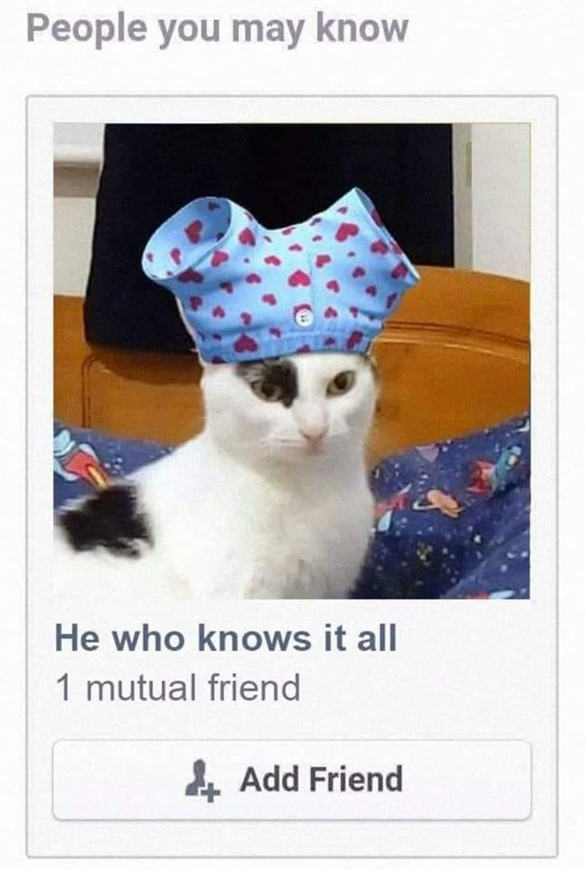 Cat - People you may know He who knows it all 1 mutual friend 4 Add Friend