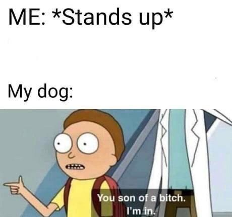 Cartoon - ME: *Stands up* My dog: You son of a bitch. I'm in.