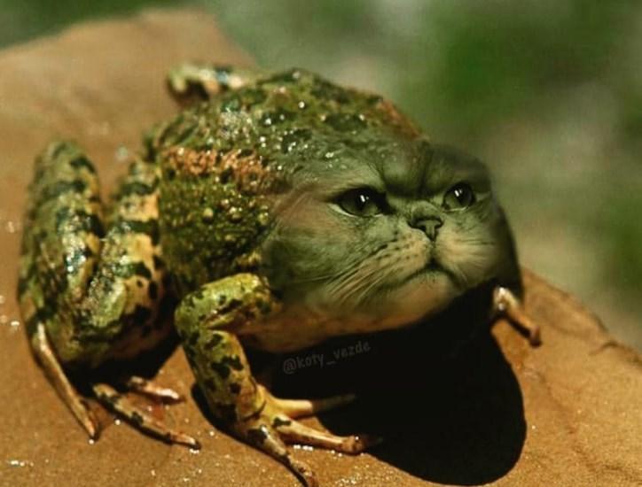 Toad - @koty_vezde