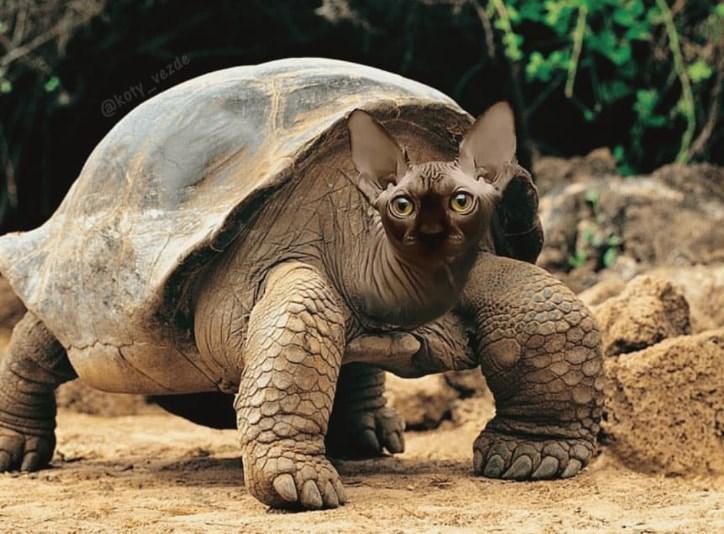 Tortoise - @koty_vezde