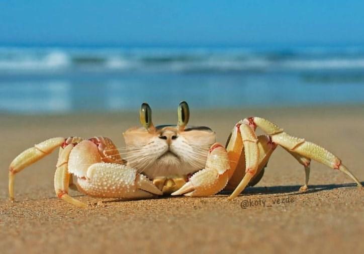 Crab - @koty_vezde