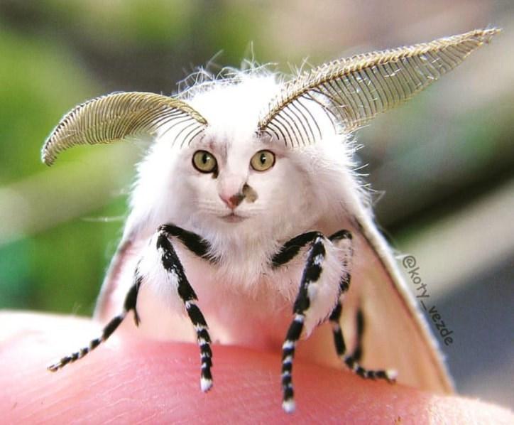 Insect - @koty vezde