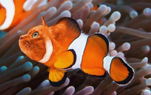 Fish - @koty vezde