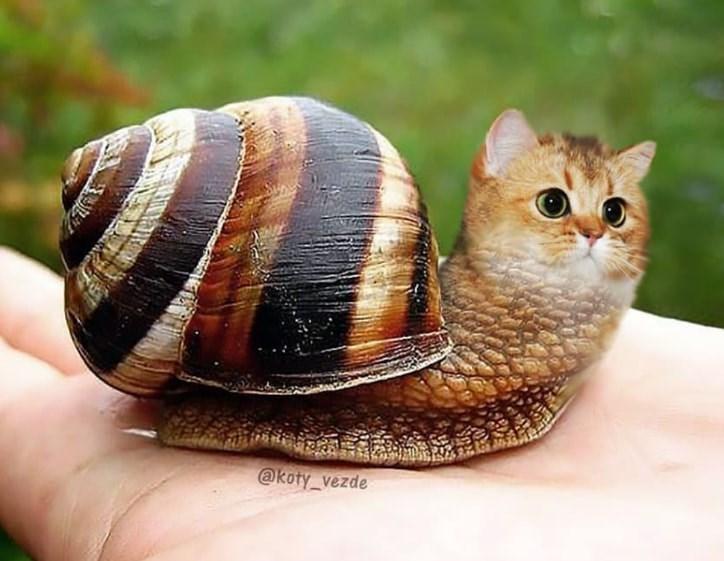 Snails and slugs - @koty_vezde