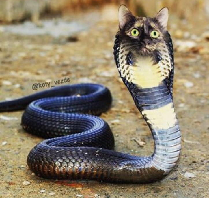 Snake - @koty_vezde
