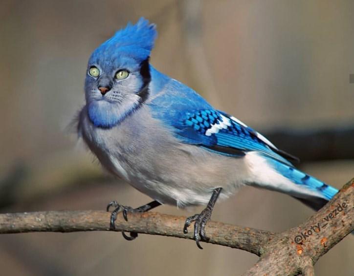 Bird - @koty_vezde