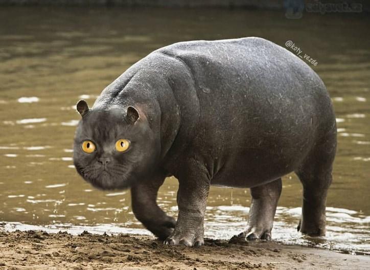 Mammal - alysvetke @koty_vezde