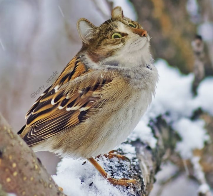 Bird - @koty vezde