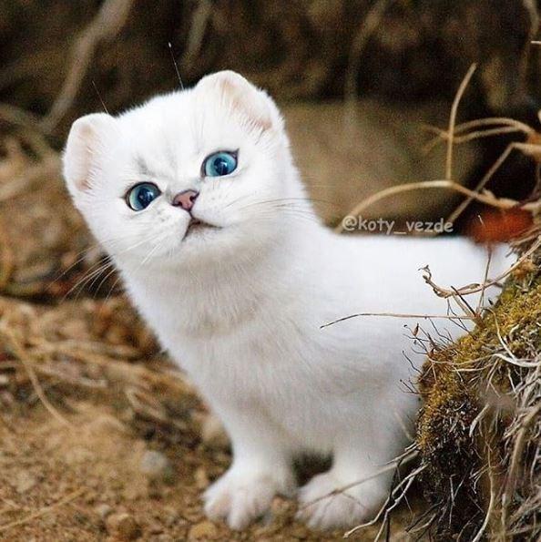 Cat - ekoty_vezde