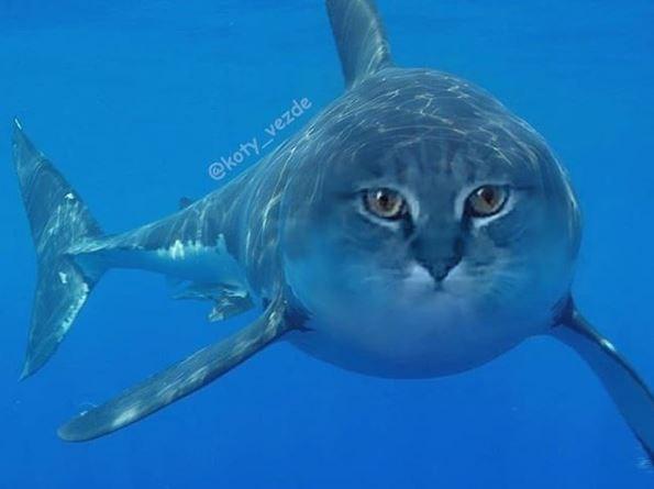 Fish - @koty_vezde