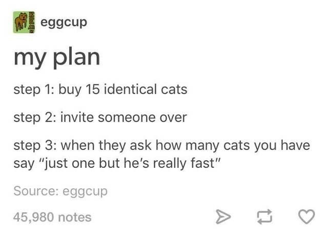 """Text - eggcup my plan step 1: buy 15 identical cats step 2: invite someone over step 3: when they ask how many cats you have say """"just one but he's really fast"""" Source: eggcup 45,980 notes"""