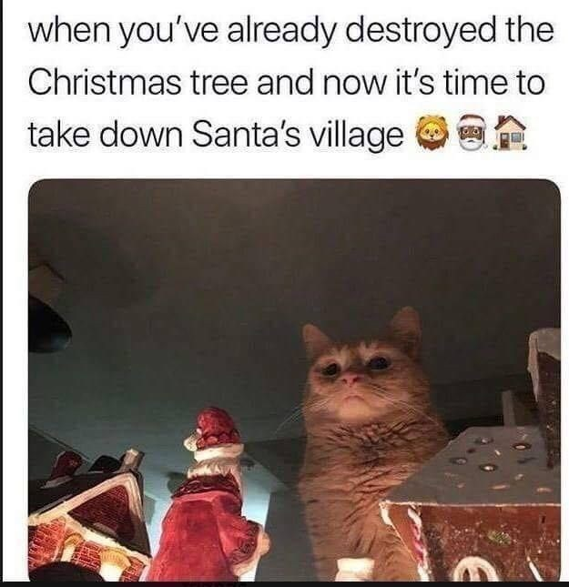 Cat - when you've already destroyed the Christmas tree and now it's time to take down Santa's village O