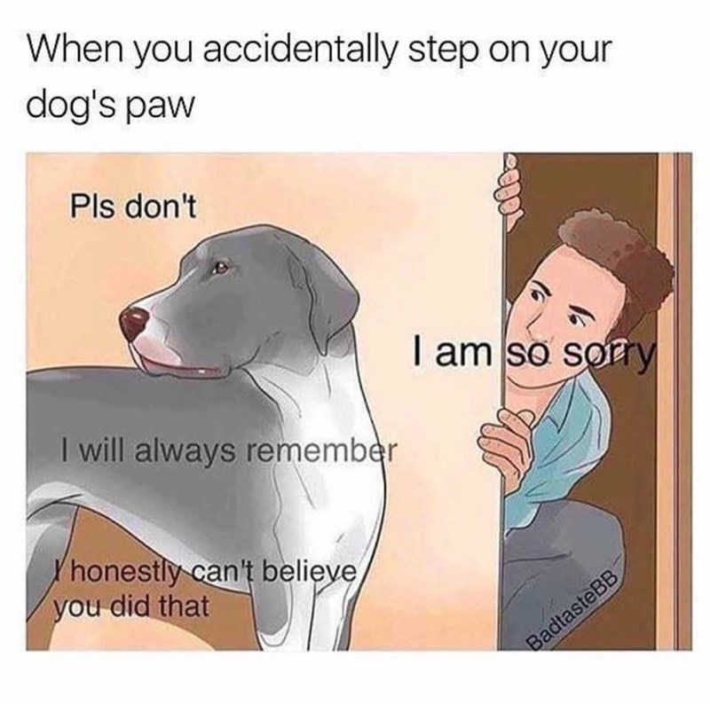 Vertebrate - When you accidentally step on your dog's paw Pls don't I am so sory I will always remember honestly can't believe you did that BadtasteBB