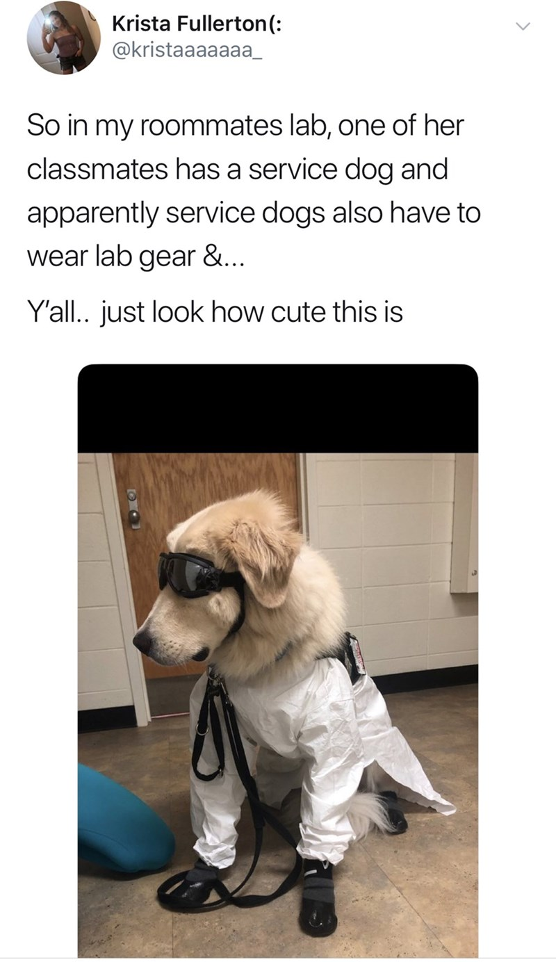 Pug - Krista Fullerton(: @kristaaaaaaa_ So in my roommates lab, one of her classmates has a service dog and apparently service dogs also have to wear lab gear &... Y'all.. just look how cute this is