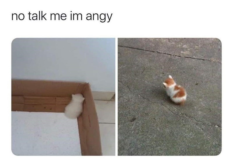 Cat - no talk me im angy