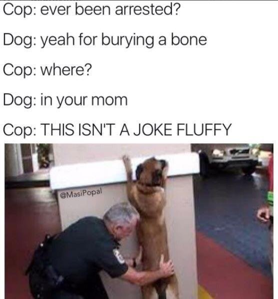 Text - Cop: ever been arrested? Dog: yeah for burying a bone Cop: where? Dog: in your mom Cop: THIS ISN'TA JOKE FLUFFY @MasiPopal