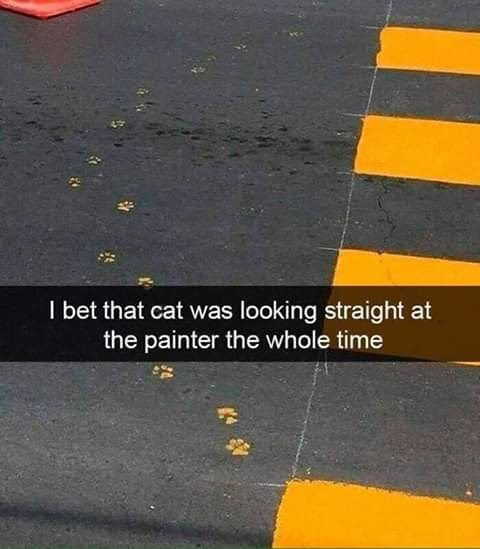Asphalt - I bet that cat was looking straight at the painter the whole time