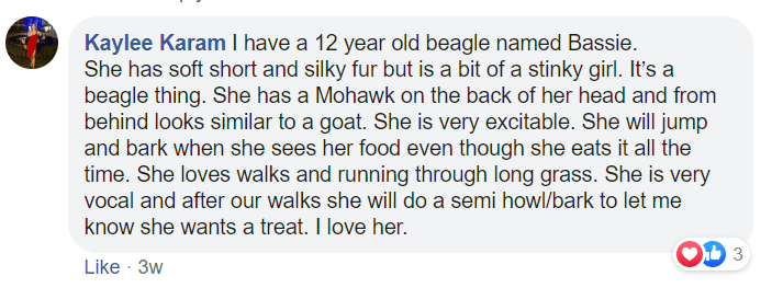 Text - Kaylee Karam I have a 12 year old beagle named Bassie. She has soft short and silky fur but is a bit of a stinky girl. It's a beagle thing. She has a Mohawk on the back of her head and from behind looks similar to a goat. She is very excitable. She will jump and bark when she sees her food even though she eats it all the time. She loves walks and running through long grass. She is very vocal and after our walks she will do a semi howl/bark to let me know she wants a treat. I love her. Lik