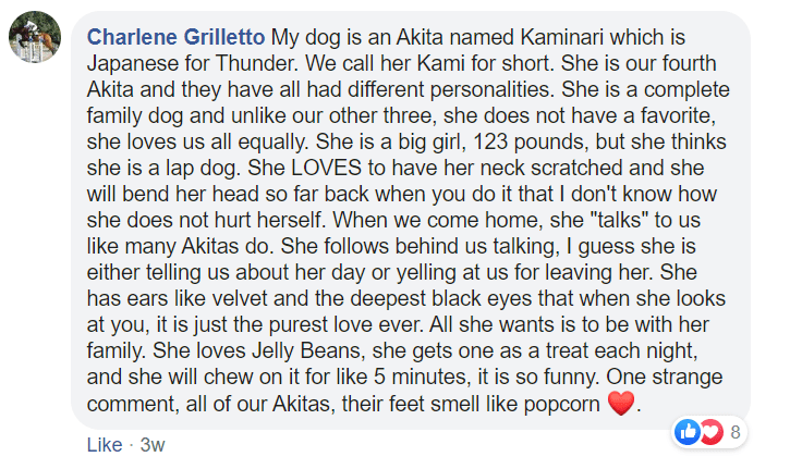 Text - Charlene Grilletto My dog is an Akita named Kaminari which is Japanese for Thunder. We call her Kami for short. She is our fourth Akita and they have all had different personalities. She is a complete family dog and unlike our other three, she does not have a favorite, she loves us all equally. She is a big girl, 123 pounds, but she thinks she is a lap dog. She LOVES to have her neck scratched and she will bend her head so far back when you do it that I don't know how she does not hurt he