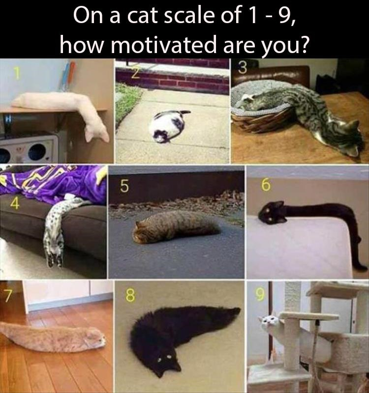 Organism - On a cat scale of 1 - 9, how motivated are you? 3 6. 8.
