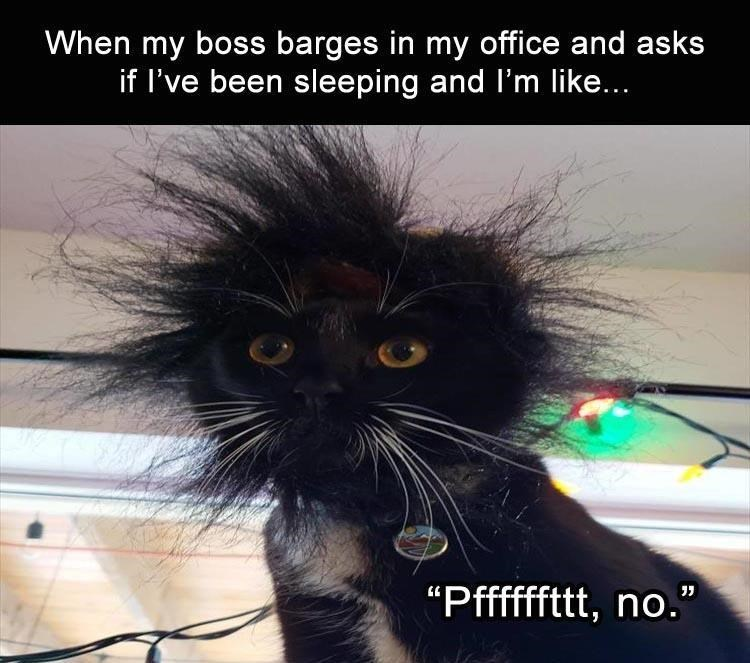 "Cat - When my boss barges in my office and asks if I've been sleeping and l'm like... ""Pffffftt, no."""