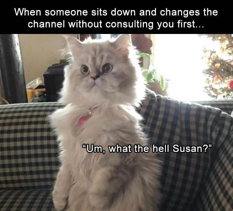 "Cat - When someone sits down and changes the channel without consulting you first... ""Um, what the hell Susan?"""