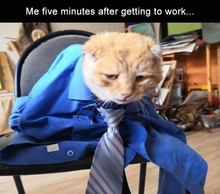 Cat - Me five minutes after getting to work...