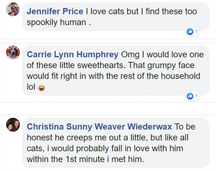 Text - Jennifer Price I love cats but I find these too spookily human. Carrie Lynn Humphrey Omg I would love one of these little sweethearts. That grumpy face would fit right in with the rest of the household lol 0 1 Christina Sunny Weaver Wiederwax To be honest he creeps me out a little, but like all cats, i would probably fall in love with him within the 1st minute i met him.