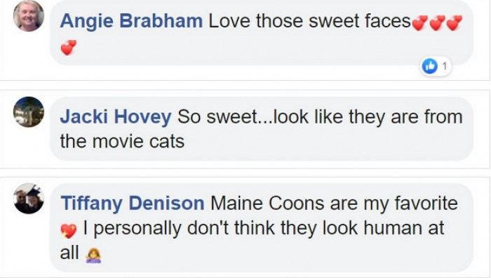 Text - Angie Brabham Love those sweet facese Jacki Hovey So sweet...look like they are from the movie cats Tiffany Denison Maine Coons are my favorite I personally don't think they look human at all