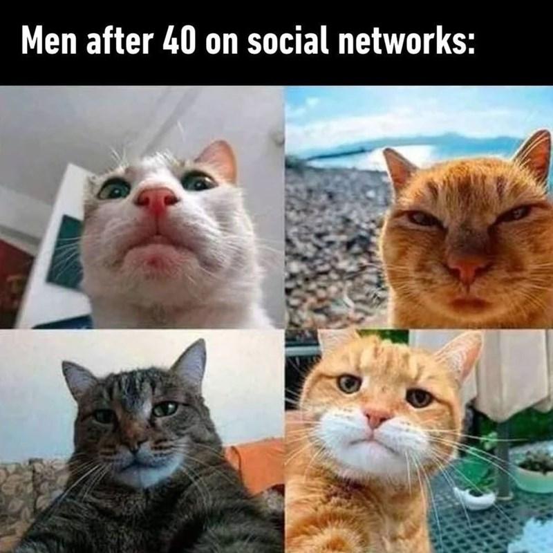 cat memes - 9407552256