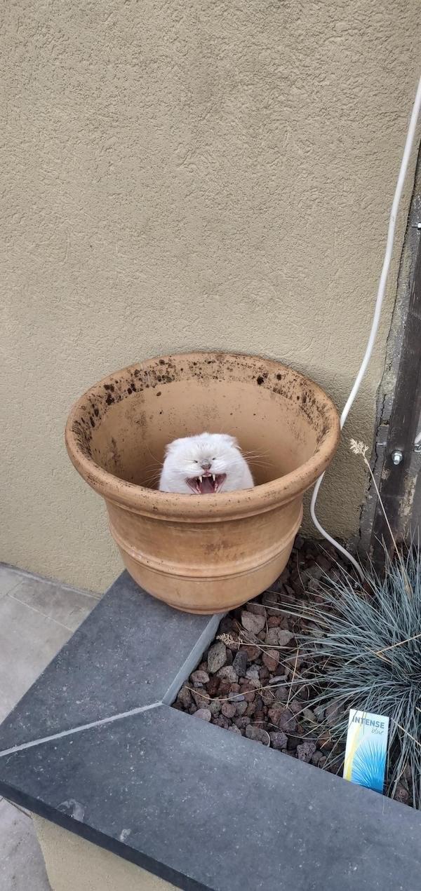 Flowerpot - INTENSE