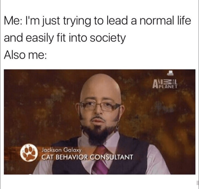 Text - Me: I'm just trying to lead a normal life and easily fit into society Also me: IPLANET Jackson Galaxy CAT BEHAVIOR CONSULTANT