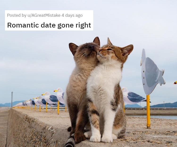 Cat - Posted by u/AGreatMistake 4 days ago Romantic date gone right