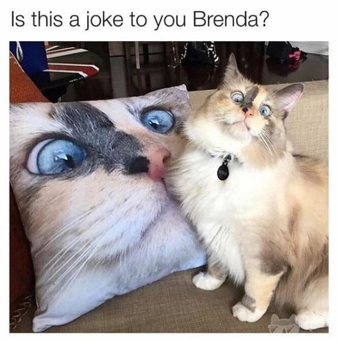Cat - Is this a joke to you Brenda?