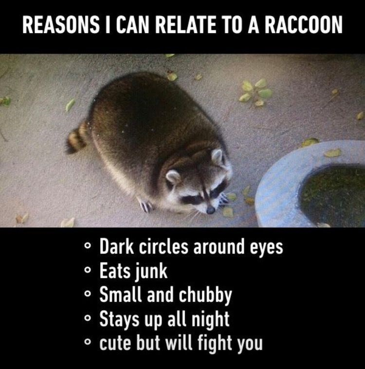 Procyonidae - REASONS I CAN RELATE TO A RACCOON • Dark circles around eyes • Eats junk • Small and chubby Stays up all night o cute but will fight you
