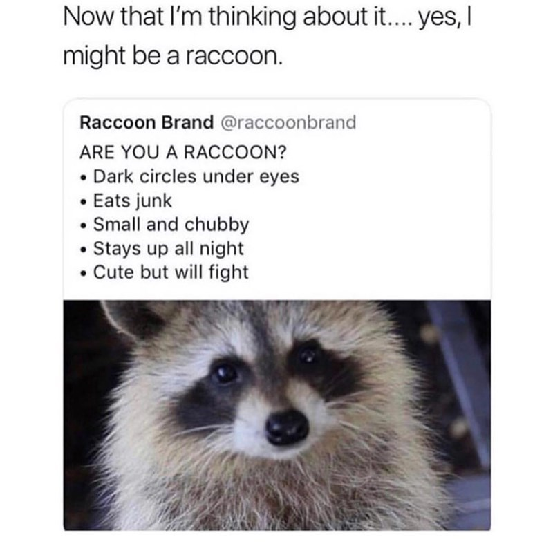 Mammal - Now that l'm thinking about it.. yes, I might be a raccoon. Raccoon Brand @raccoonbrand ARE YOU A RACCOON? • Dark circles under eyes • Eats junk • Small and chubby Stays up all night • Cute but will fight