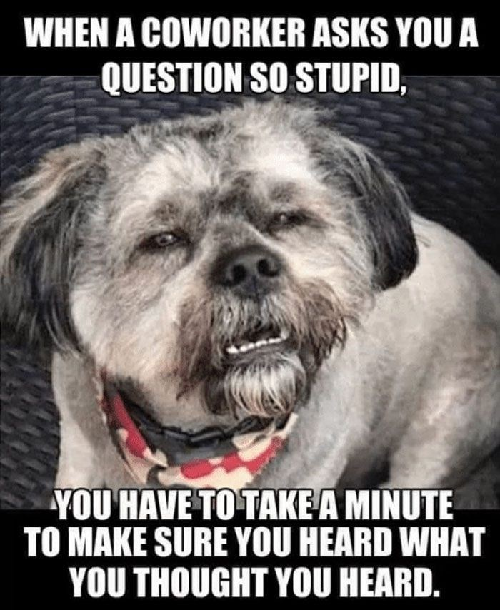 Dog - WHEN A COWORKER ASKS YOU A QUESTION SO STUPID, YOU HAVE TO TAKE A MINUTE TO MAKE SURE YOU HEARD WHAT YOU THOUGHT YOU HEARD.