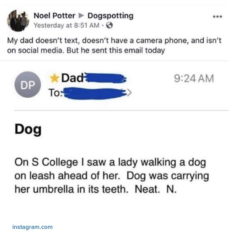 Text - Noel Potter Dogspotting Yesterday at 8:51 AM O My dad doesn't text, doesn't have a camera phone, and isn't on social media. But he sent this email today Dad 9:24 AM DP To: Dog On S College I saw a lady walking a dog on leash ahead of her. Dog was carrying her umbrella in its teeth. Neat. N. instagram.com