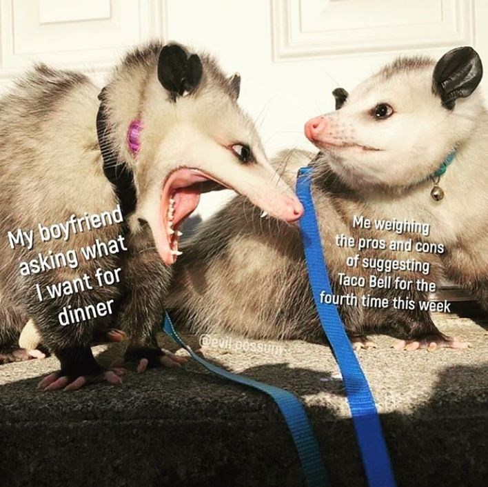 Vertebrate - My boyfriend asking what I want for dinner Me weighning the pros and cons of suggesting Taco Bell for the fourth time this week @evil possumy