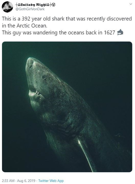 Adaptation - tagullaby NightATO @GothGirlVonDark This is a 392 year old shark that was recently discovered in the Arctic Ocean. This guy was wandering the oceans back in 1627 2:33 AM Aug 6, 2019 Twitter Web App