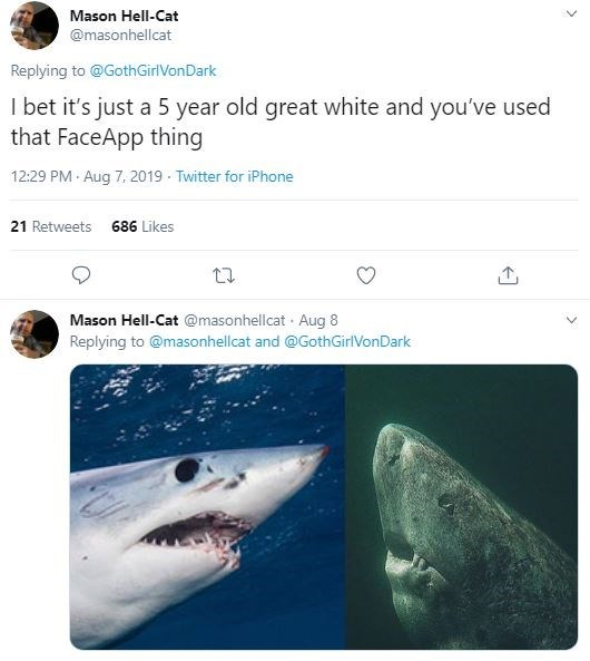 Great white shark - Mason Hell-Cat @masonhellcat Replying to @GothGirlVonDark I bet it's just a 5 year old great white and you've used that FaceApp thing 12:29 PM Aug 7, 2019 - Twitter for iPhone 21 Retweets 686 Likes Mason Hell-Cat @masonhellcat · Aug 8 Replying to @masonhellcat and @GothGirlVonDark