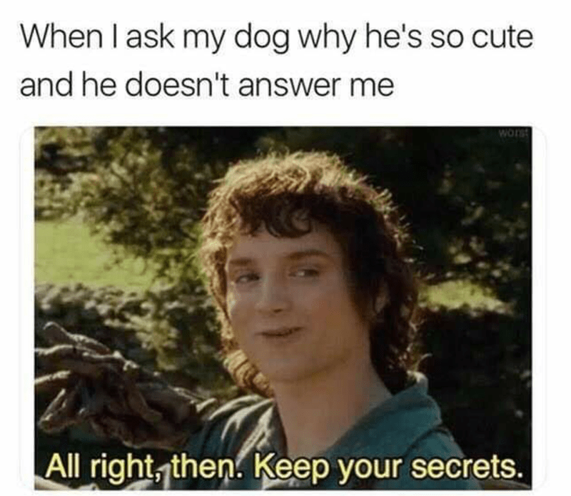 Hair - When I ask my dog why he's so cute and he doesn't answer me worst All right, then. Keep your secrets.