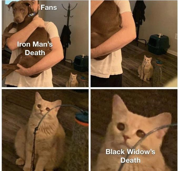 Cat - Fans Iron Man's Death Black Widow's Death