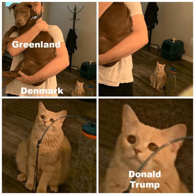 Cat - Greenland Denmark Donald Trump